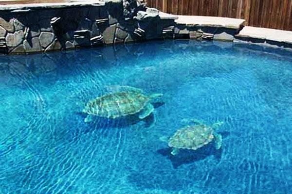 Accesorios para transformar tu alberca for Accesorios piscinas